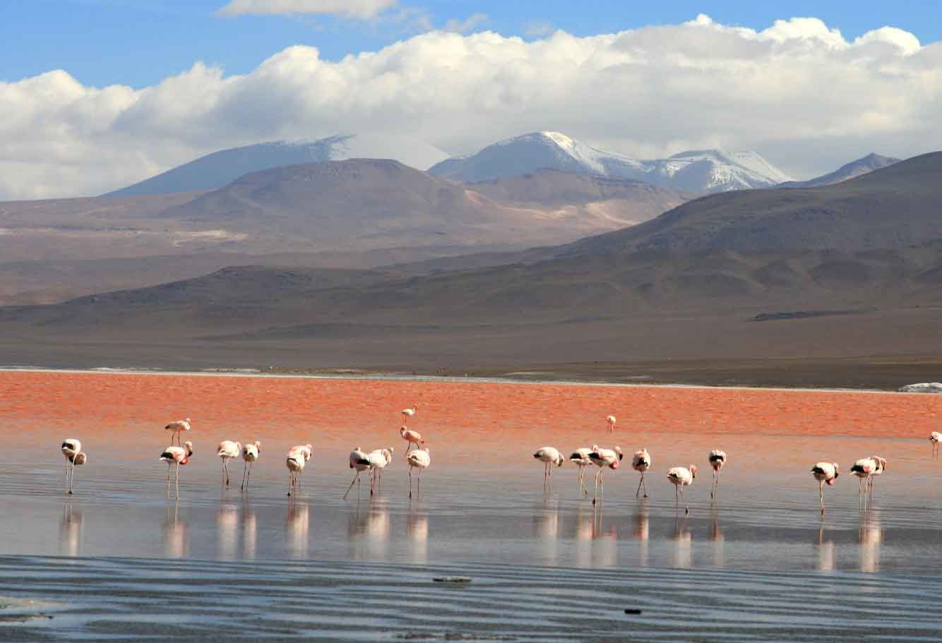 Tours South America, Peru, Bolivia and Chile Tours: Tour in Peru – Bolivia 25 days visit: Lima, Trujillo, Chiclayo, Chachapoyas, Kuelap, Paracas, Nazca, Arequipa, Puno, La Paz, Uyuni, Cusco, Sacred Valley and Machu Picchu.. The best tourist packages in Peru and South America.
